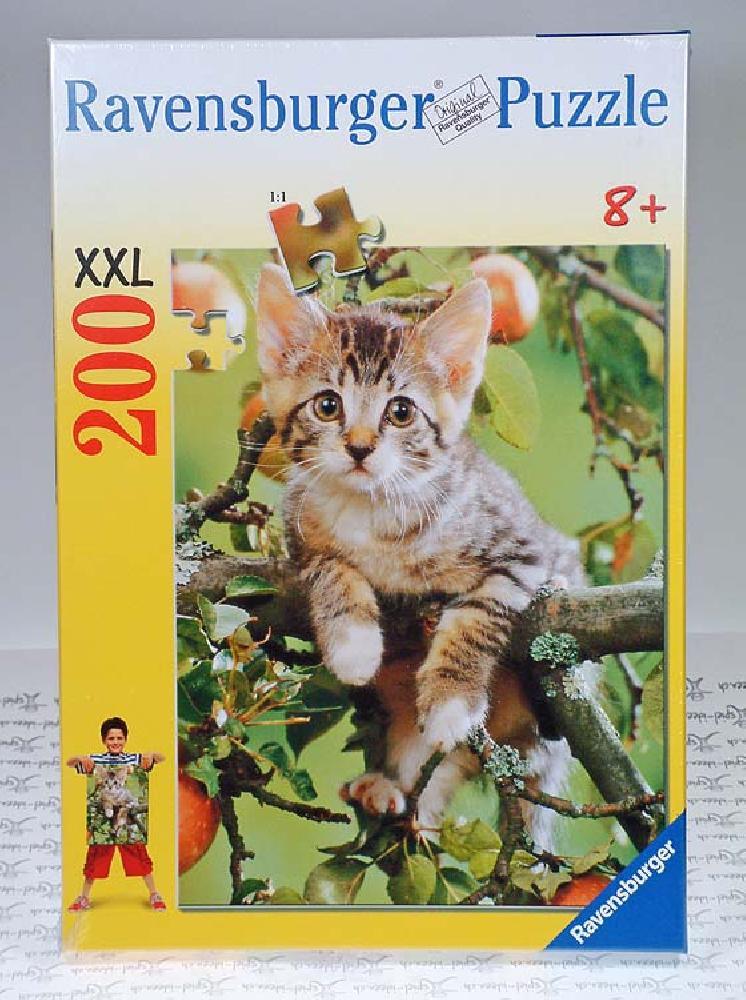 Endearing Kitten