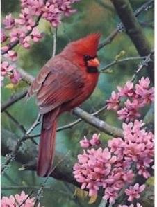 Spring Time Cardinal