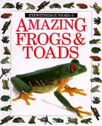 amazing : frogs & toads